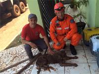 Bombeiros resgata cachorro