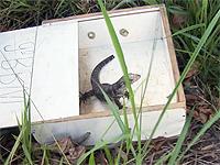 Filhote de lagarto é retirado de motor de carro