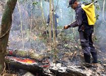 Incêndios florestais empenham guarnições do CBMMG