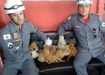 Bombeiros de Barbacena resgatam oito filhotes de cachorro que foram jogados em córrego da cidade