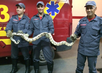 bombeiros resgatam jiboia de 2 metros