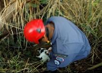 Cães dos bombeiros ajudam a resgatar corpo de jovem desaparecido há 18 dias