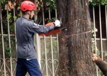 Corte de árvore: quando chamar os bombeiros